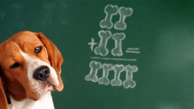 توانایی های ذهنی در سگ ها