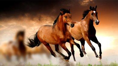 نگهداری و مراقبت از اسب - اصول نگهداری اسب