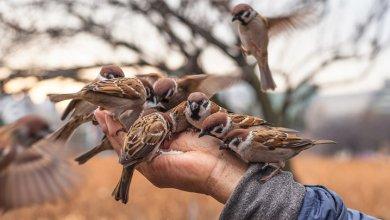 کمک به حیوانات خیابانی در زمستان