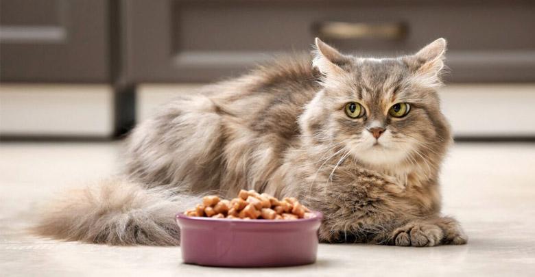 دستور غذای خانگی مخصوص گربه های دیابتی