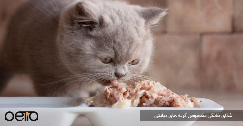 تصویری از غذای خانگی مخصوص گربه های دیابتی