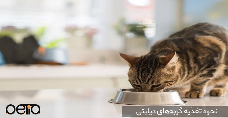 تغذیه گربههای دیابتی