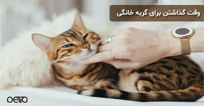 اهمیت بازی با گربه