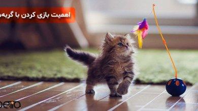 تصویر بازی کردن با گربهها