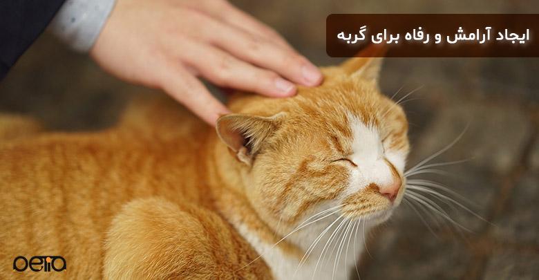 آرامش و رفاه برای گربه
