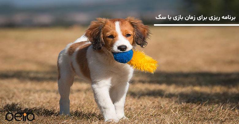 تصویری از بازی با سگ