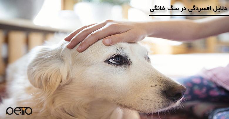 افسردگی در سگ