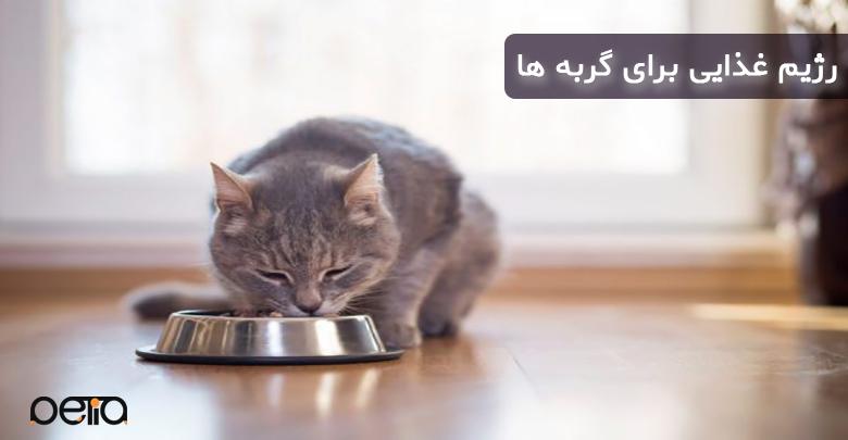 تصویری از غذا خوردن گربه خانگی