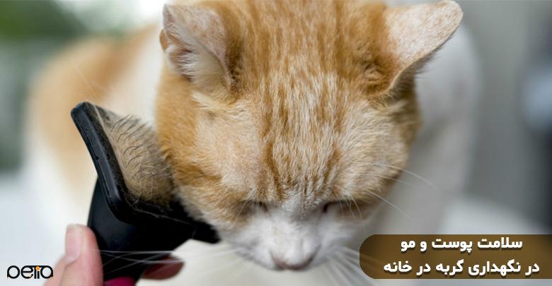 سلامت پوست و موی گربه در خانه.