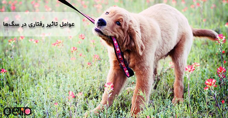 تصویری از عوامل تاثیر رفتاری در سگها