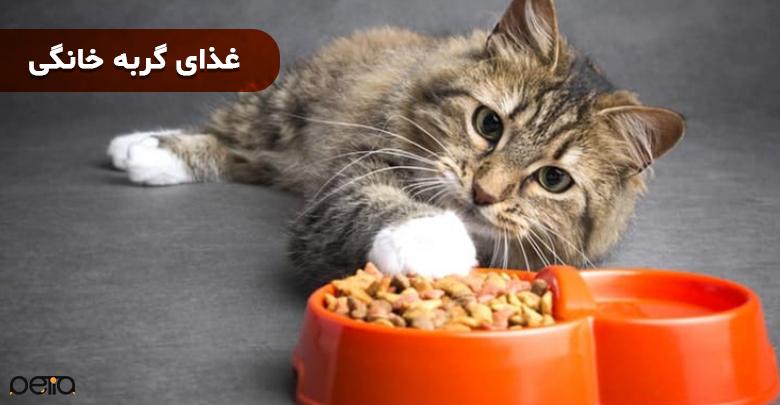 تصویری از غذای گربه خانگی