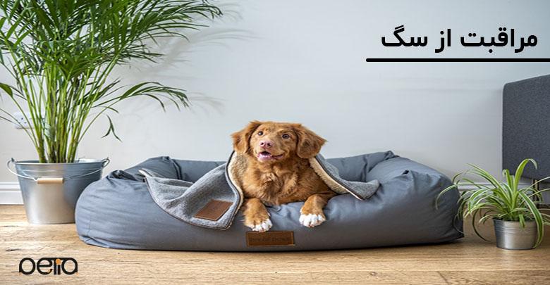 تصویری از نشانه مراقبت از سگ