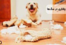 تصویری از مشکلات رفتاری در سگها