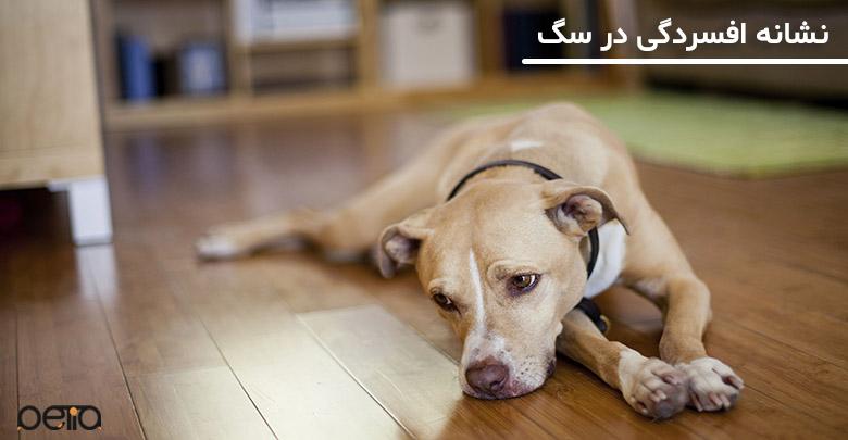 تصویر افسردگي در سگ