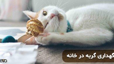 نگهداری گربه در خانه