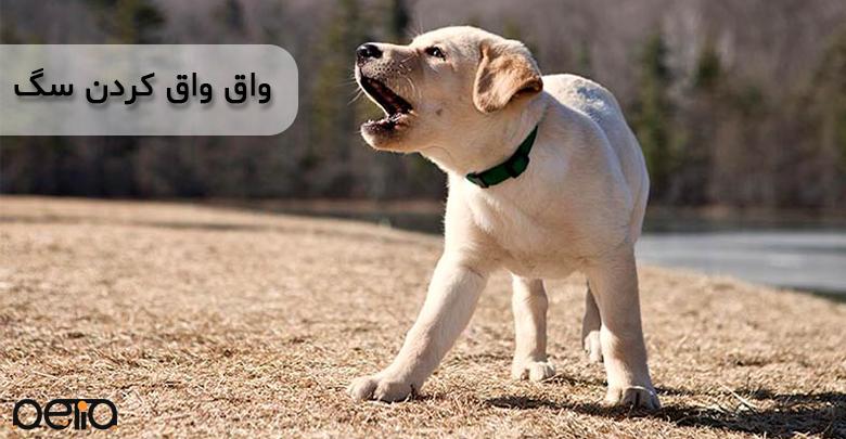تصویری از نشان دادن واق واق کردن سگ