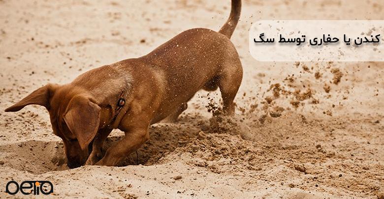 تصویری از کندن یا حفاری توسط سگ