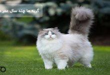 گربه ها چند سال عمر می کنند؟