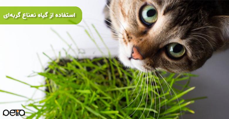 استفاده کردن از گیاه نعناع گربهای