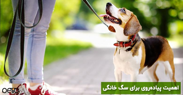 اهمیت پیاده روی برای سگ خانگی
