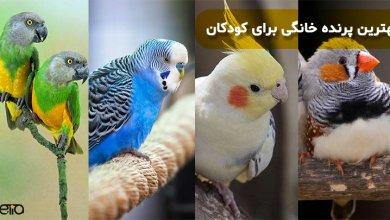 بهترین پرنده خانگی برای کودکان