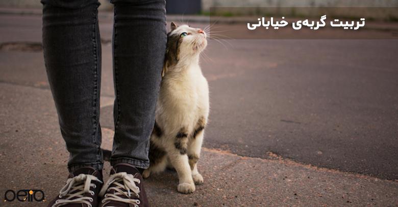 علاقه گربه به مالیدن خود به پاهای انسان