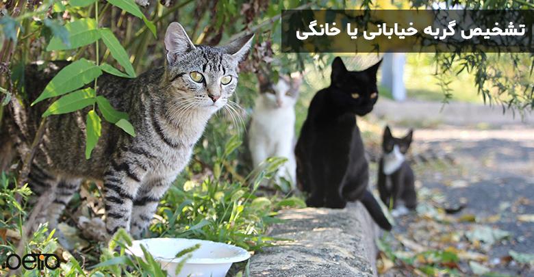 گربه هایی با نزادهای مختلف