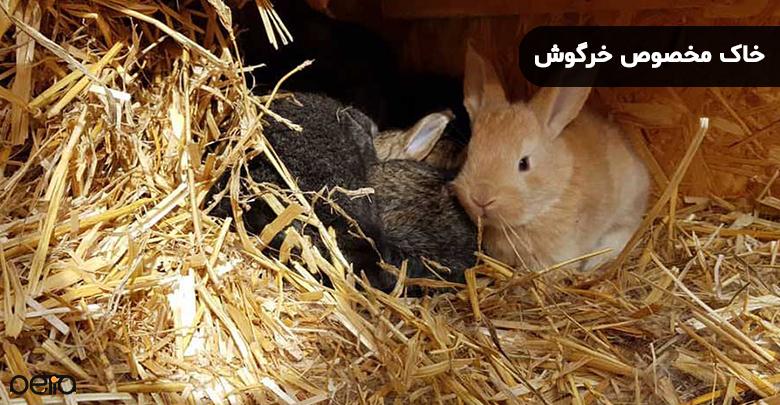 تصویری از خاک مخصوص خرگوش