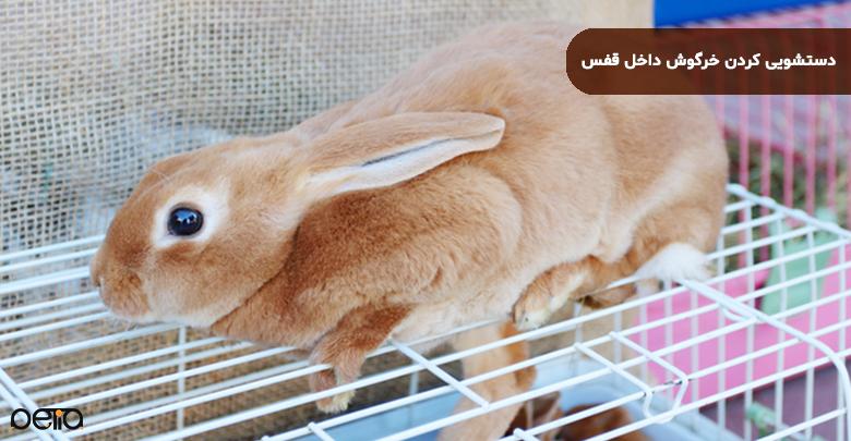 تصویر دستشویی کردن خرگوش داخل قفس