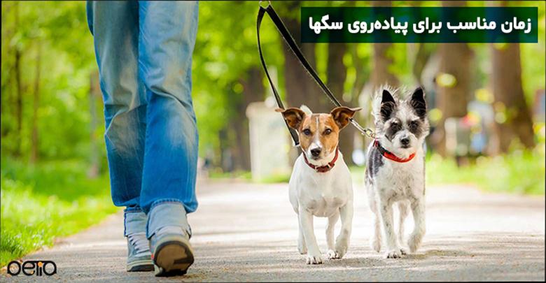زمان پیادهروی با سگ