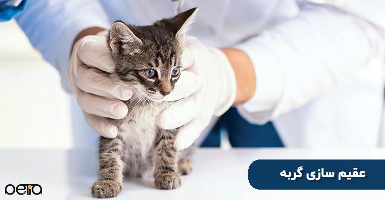 سن مناسب عقیم سازی گربه ها