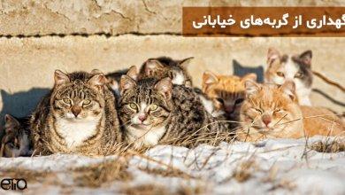 گربه های خیابانی در کنار هم