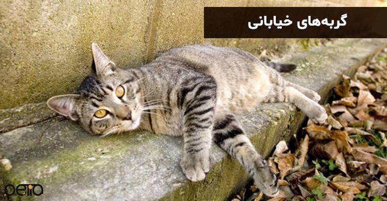 گربهی خیابانی که در گوشهای دراز کشیده است.