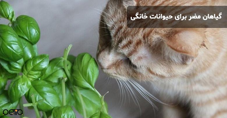 گیاهان مضر برای حیوانات خانگی