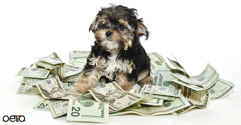 پرداخت هزینه برای سرپرستی سگ