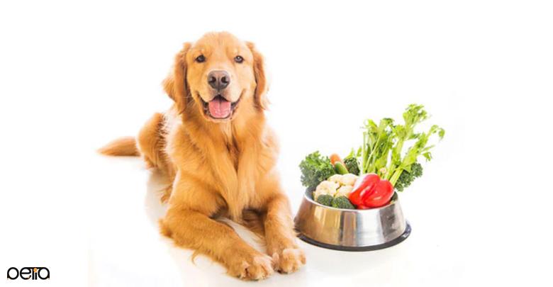 سبزیجات تازه برای سگ ها