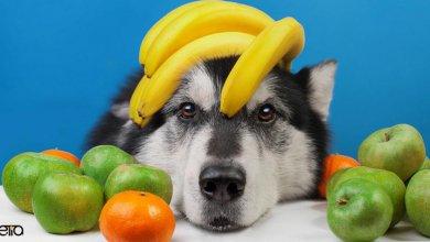انواع سبزیجات و میوه های تازه برای سگ ها