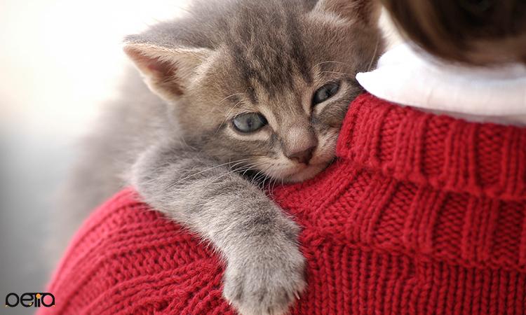 رفتار گربه بعد از عمل