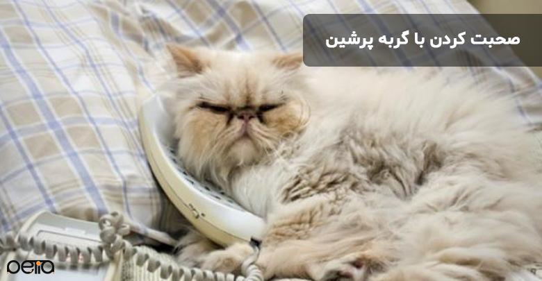 صحبت کردن با گربه