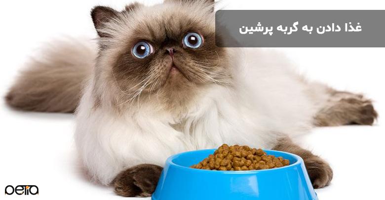 غذا دادن به گربه پرشین