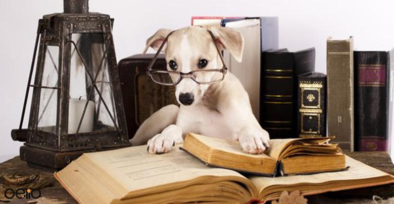 مطالعه در مورد تربیت سگ