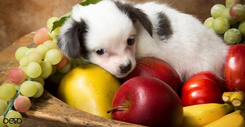 میوه مناسب برای سگ
