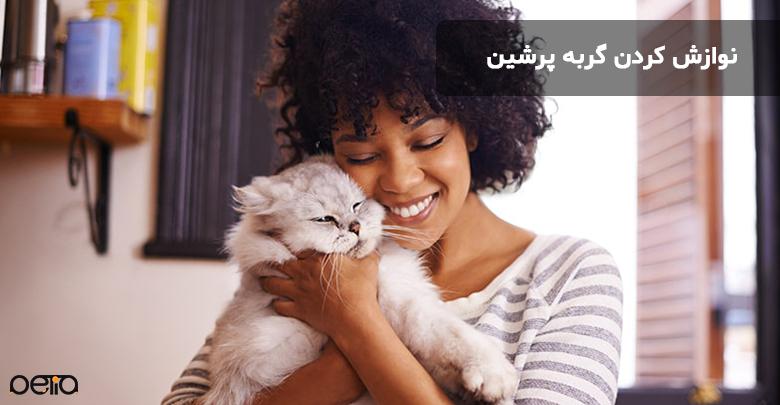 نوازش کردن گربه پرشین