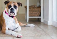 اشتباهات رایج در نگهداری حیوانات خانگی