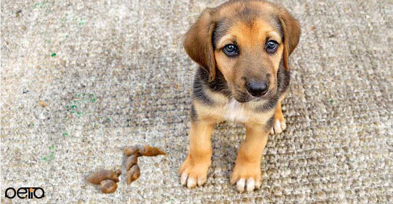 دلایل تغییر رنگ مدفوع سگ