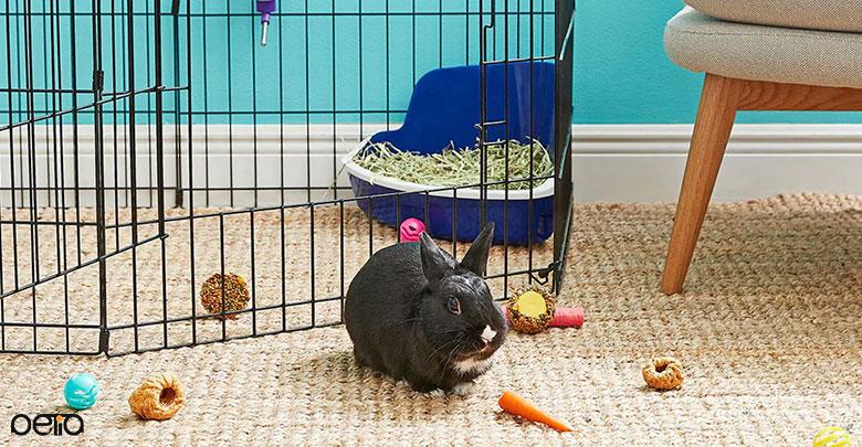 راهنمای خرید وسایل نگهداری از خرگوش