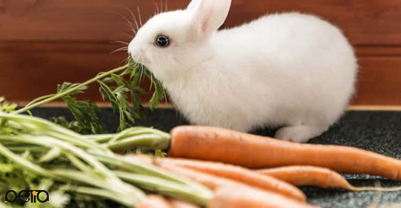 رژیم غذایی خرگوش