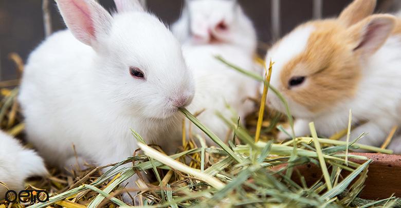 علف و یونجه تازه برای خرگوش