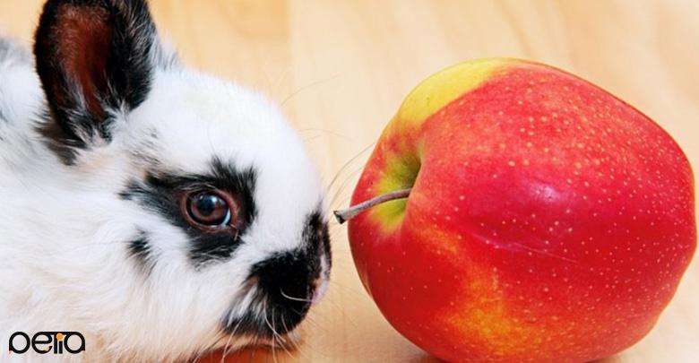 بررسی میوه برای خرگوش