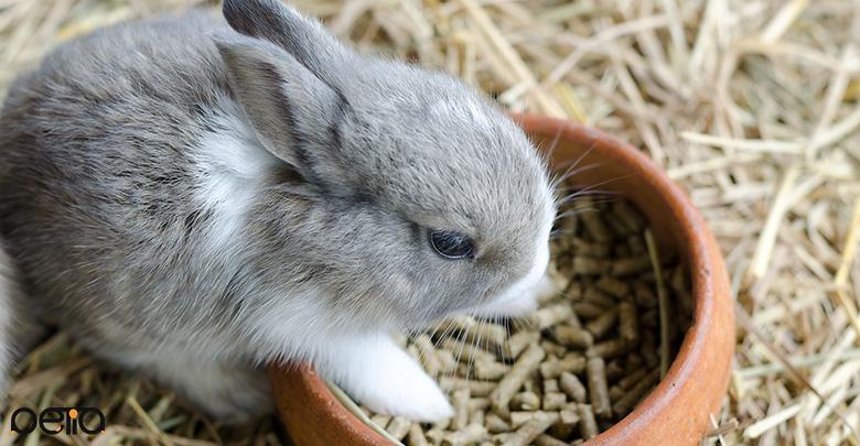 بررسی پلت خرگوش
